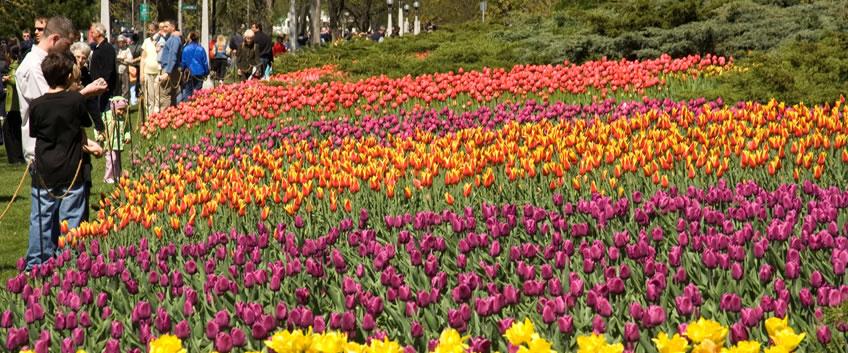 Canadian Tulip Festival